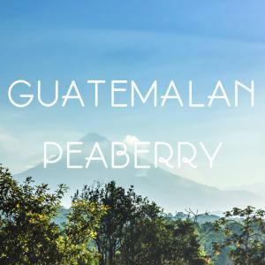 Guatemala Peaberry coffee